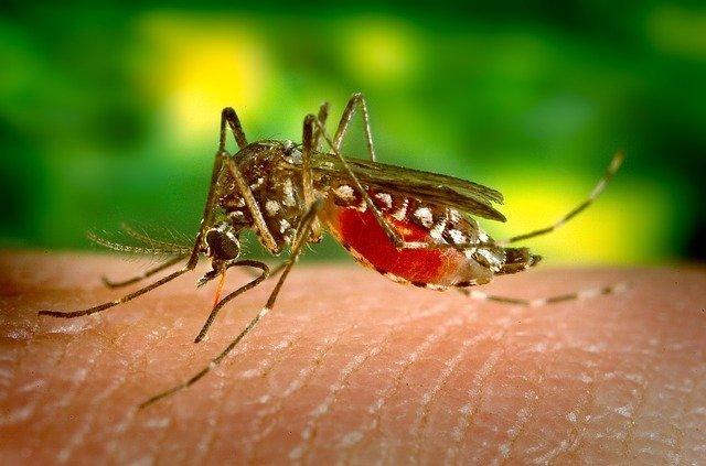 neem olie muggen