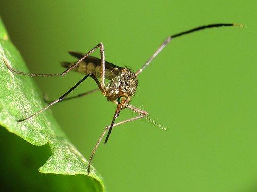 wasnoten tegen muggen